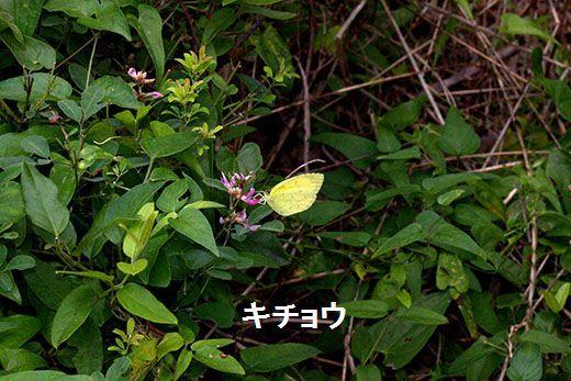 IMG_1668__.jpg