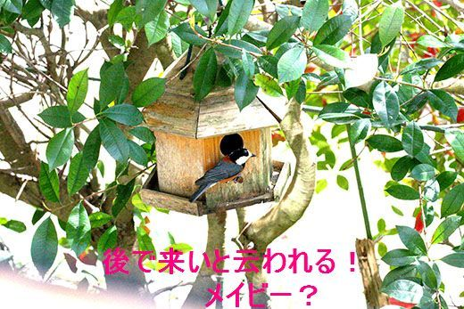 IMG_7743_.jpg