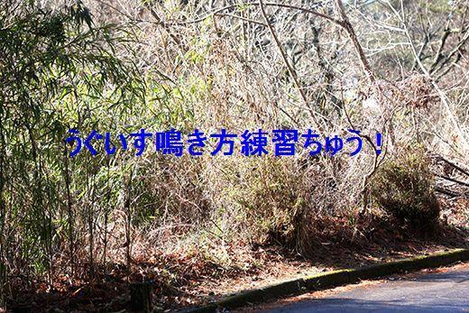 IMG_8670__.jpg