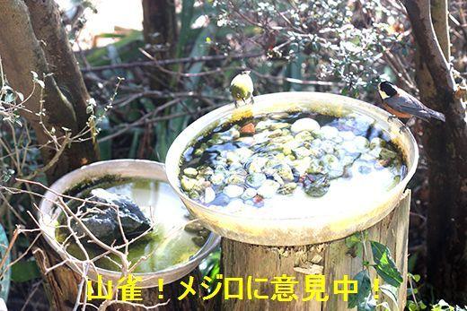 IMG_8713__.jpg