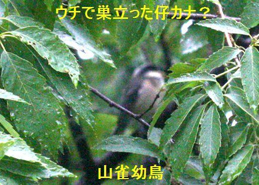IMG_9137__.jpg