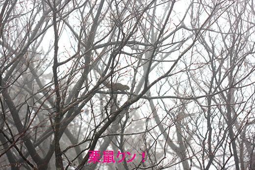 IMG_9287__.jpg