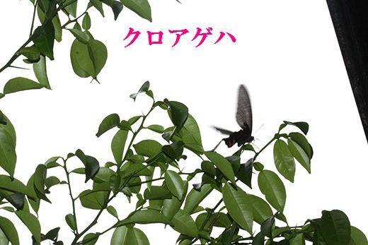 IMG_9874__.jpg