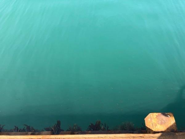 IMG_0992 海