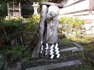 松尾大社の椋の霊樹