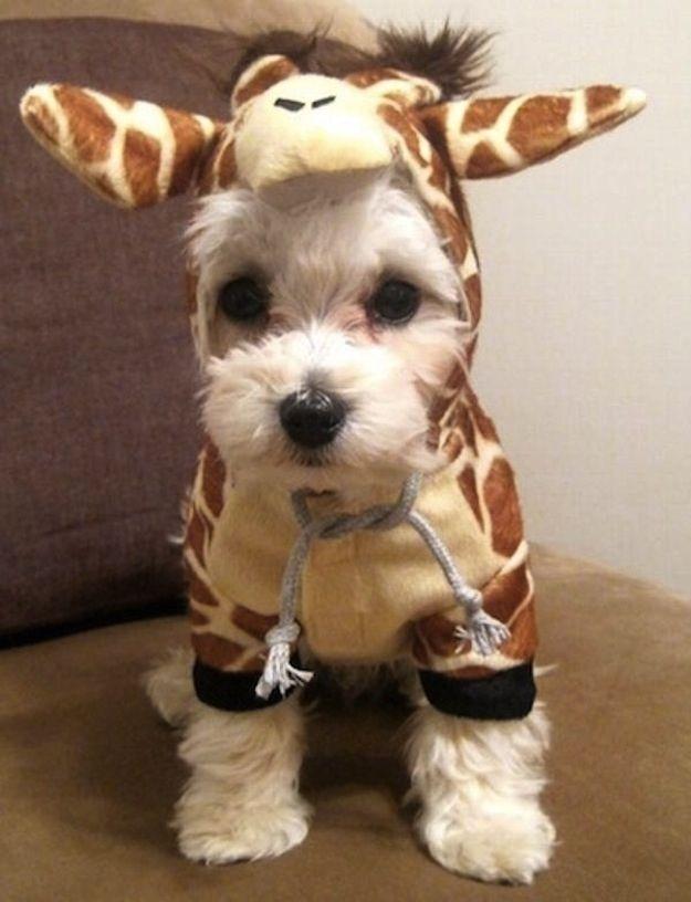 giraffe-costume.jpg