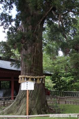 塩竈神社  (塩竈市森山)42