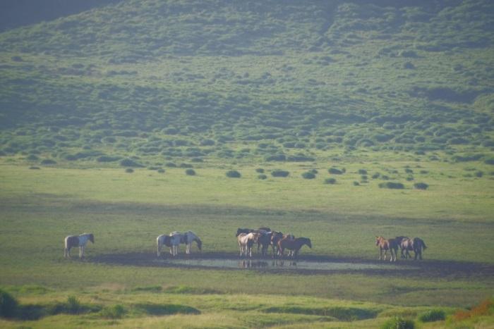 阿蘇山の馬達
