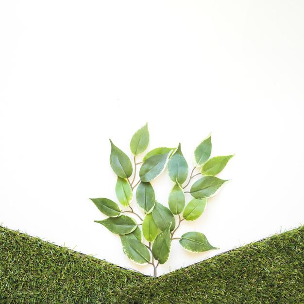 artificial-branch-between-grass-hills_23-2147852595.jpg
