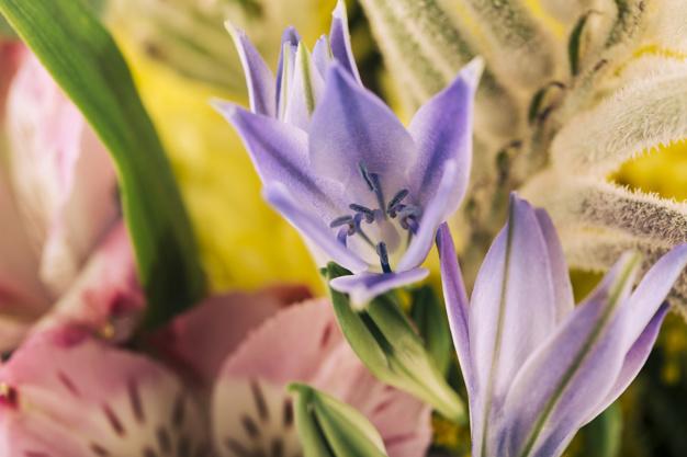 close-up-of-blooming-flowers_23-2147836339.jpg