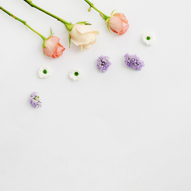 delicate-colorful-flower-on-white-background_23-2147847603.jpg