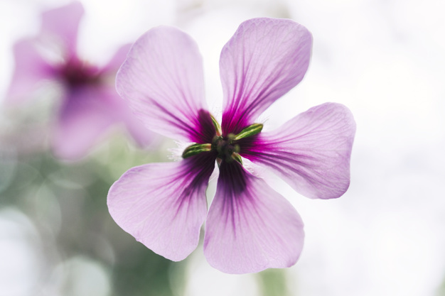 detail-of-single-pink-flower_23-2147836514.jpg