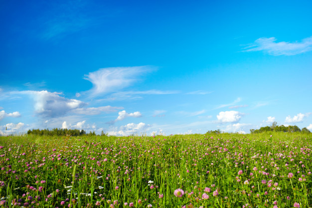 field-with-meadow-flowers_38187-714.jpg