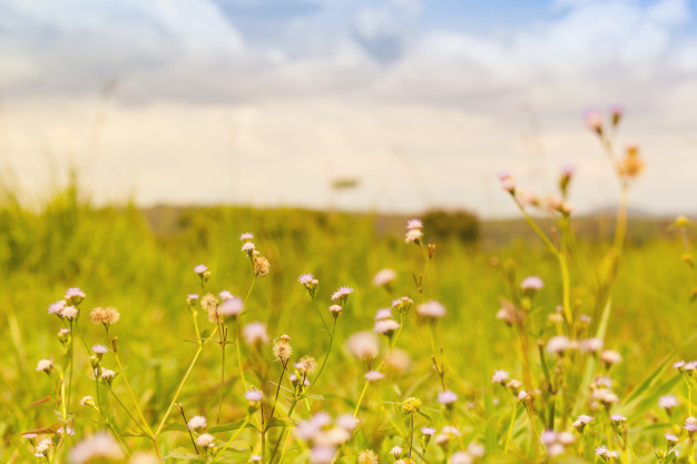 flower-in-the-field-and-background-of-cloud_48145-73.jpg