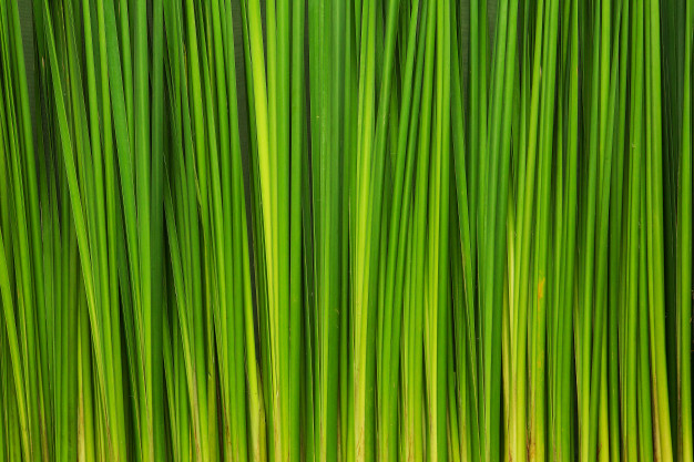 green-leaves-wall-background_42044-2260.jpg