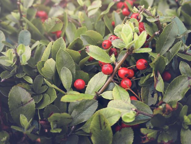 houseplant-natural-floral-foliage-decoration_53876-23397.jpg