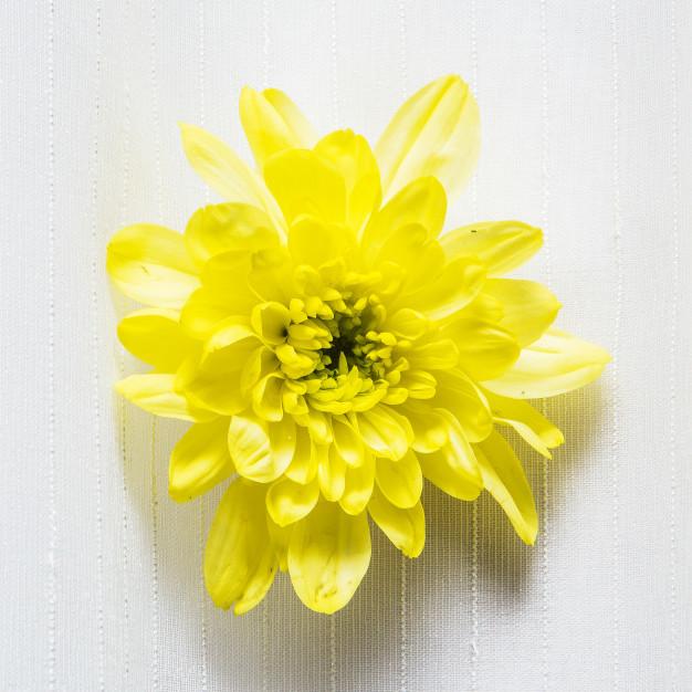 yellow-flower-isolated-on-white_42044-2318.jpg