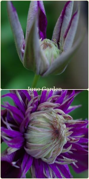 紫子丸1801125