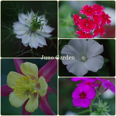 庭花180602