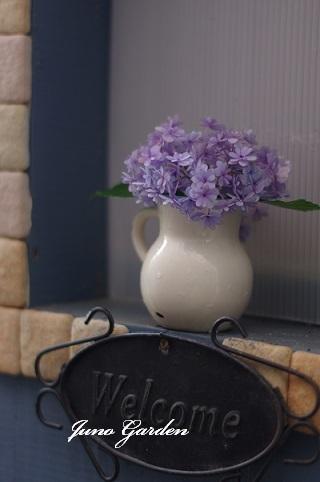 紫陽花ブルー180624
