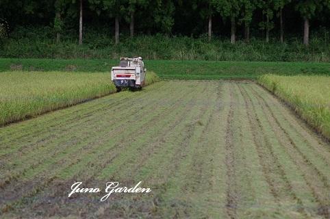 稲刈り180911