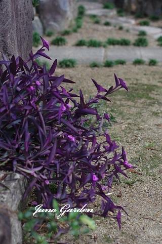 紫御殿180911