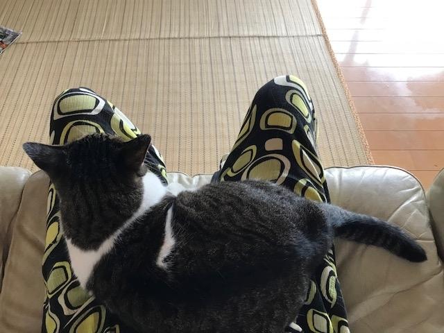 ティガれもん5パパお膝