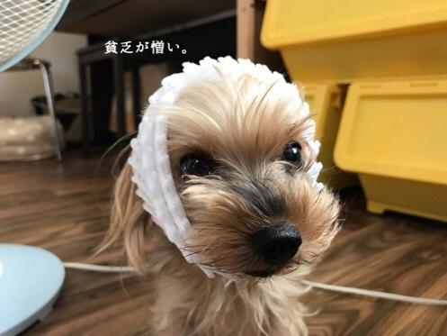 fc2blog_2018081908434125d.jpg