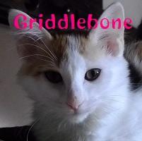 Griddlebone.jpg