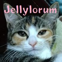 Jellylorum.jpg