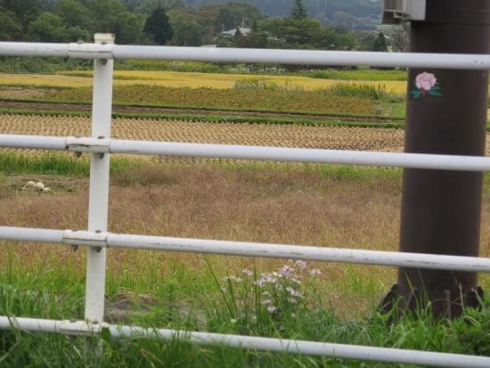 宮城県 地味に情報量が多い画像
