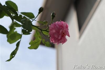 s-IMG_0046kako.jpg