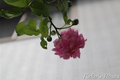 s-IMG_0048kako.jpg