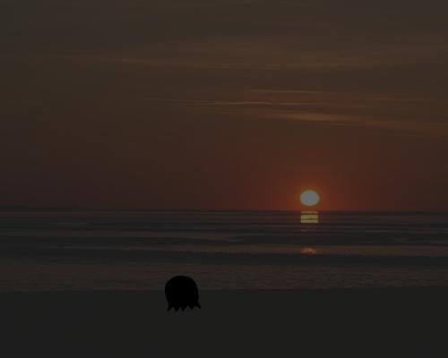 沈む夕日 こじじ