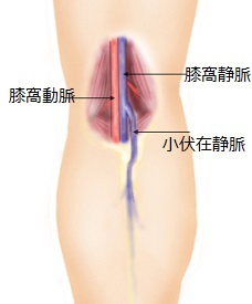 syouhukuzaizu[1]