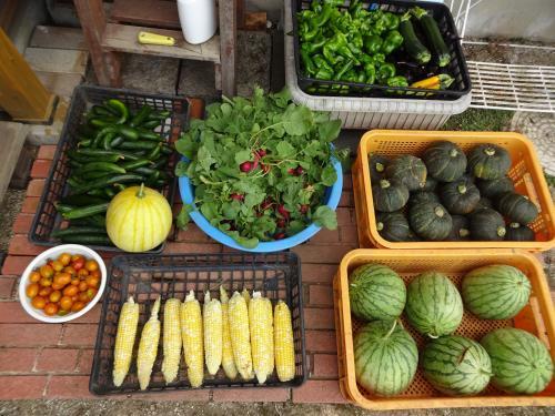 休日の朝、収穫いたしました。