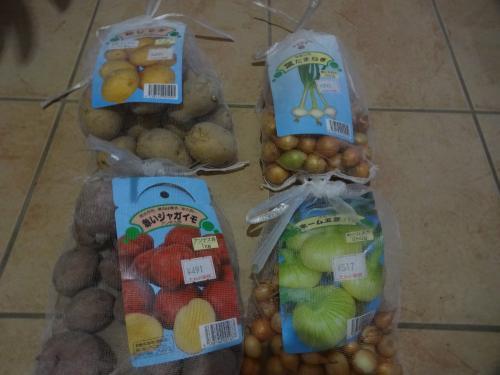 秋植えの玉ねぎ&ジャガイモです。