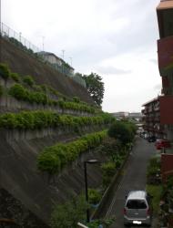 赤塚4丁目の崖