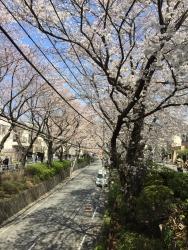 桜坂3月下旬