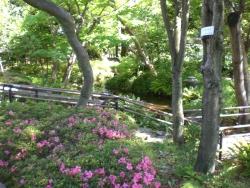 徳富蘇峰 庭園2