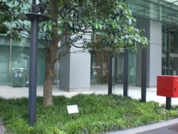 KITTE1階 タラヨウ