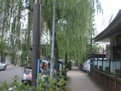 神田 柳原通りの柳並木