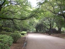 二子玉川 砧公園 緑あふれる路1