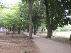 二子玉川 砧公園 緑あふれる路2