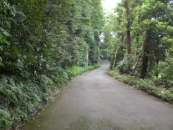 二子玉川 静嘉堂緑地 緑の小道