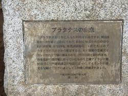 芝浦 プラタナス公園 プラタナスの木説明板