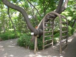 牧野記念庭園2