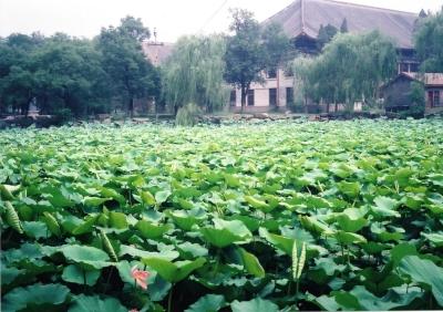 北京の初夏 北京大学勺海 1992年 北京