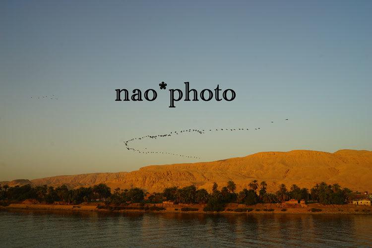DSC04870.jpg