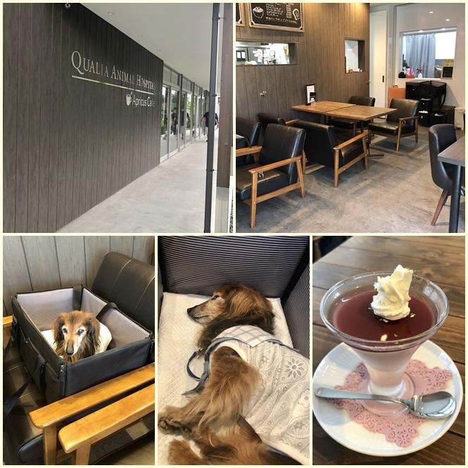 pageドックカフェ